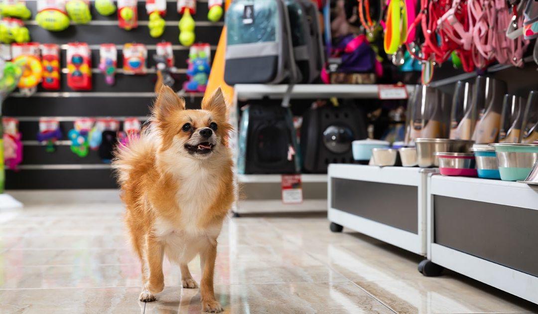 Parfaite mise en place pour un magasin d'animaux